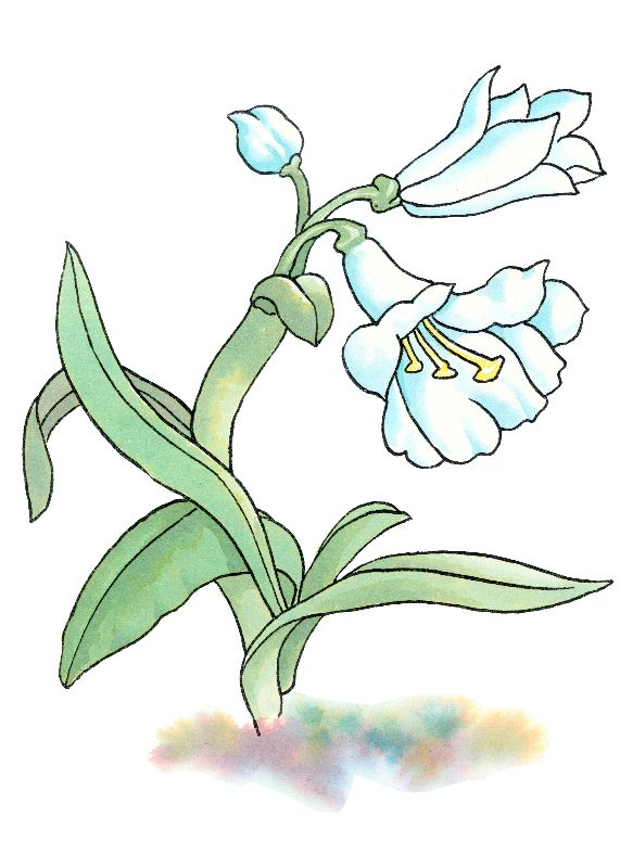 萌芽植物矢量图