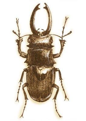 超写实素描动物昆虫