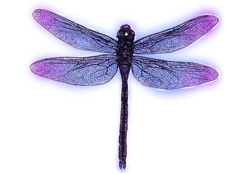 幼儿园蜻蜓头饰图片