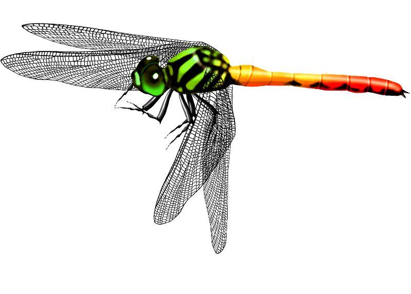 蜻蜓简易手绘图