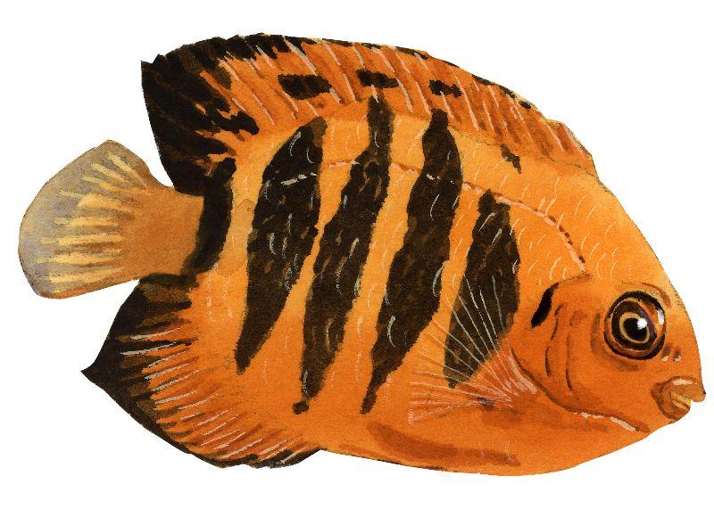 油画布系列 插画 动物 海洋