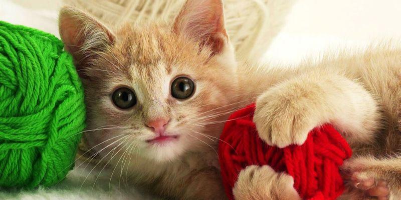 简约画-猫咪和线球装饰画 动物世界 高质量精美室内画