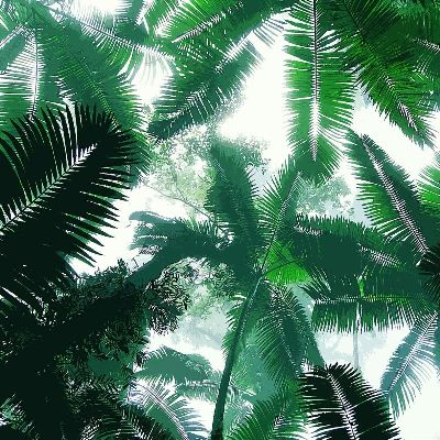 简约画-热带雨林 热带雨林,风景装饰画