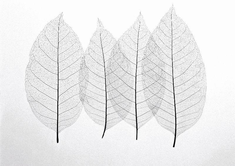 抽象树叶简笔画